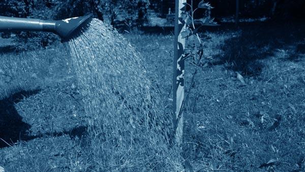 Aus einer Gießkanne wird Wasser auf eine Pflanze geschüttet